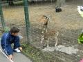 zoo-tg-mures2013_4